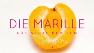 Die Marille aus Sicht der TCM - TCM Ernährungsberatung - Shiatsu - Anna Reschreiter
