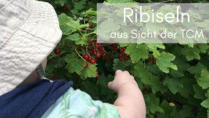 Ribiseln aus Sicht der TCM Ernährung - Anna Reschreiter - TCM Ernährung - Ernährungsberatung Wien
