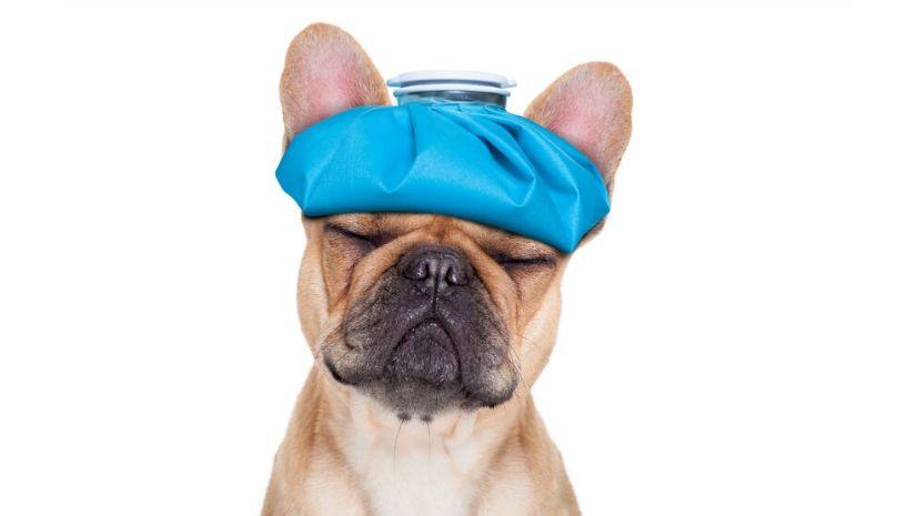 Kopfschmerzen Migräne aus Sicht der TCM - TCM Ernährung - TCM Ernährungsberatung Wien - Anna Reschreiter - annatsu